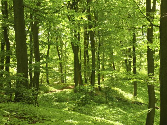 Åkulla bokskogar