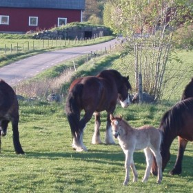 Södra Hallandsturen