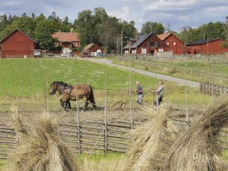 Bögsgård