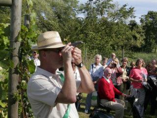 Vineyard in Åhus