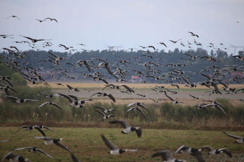 fågelsskådning ekolsunds slott