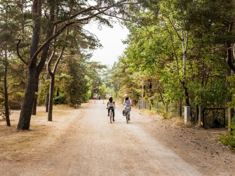 Höllviken with its unique, sparse pine forest that smells good summer time. Photo: Apelöga