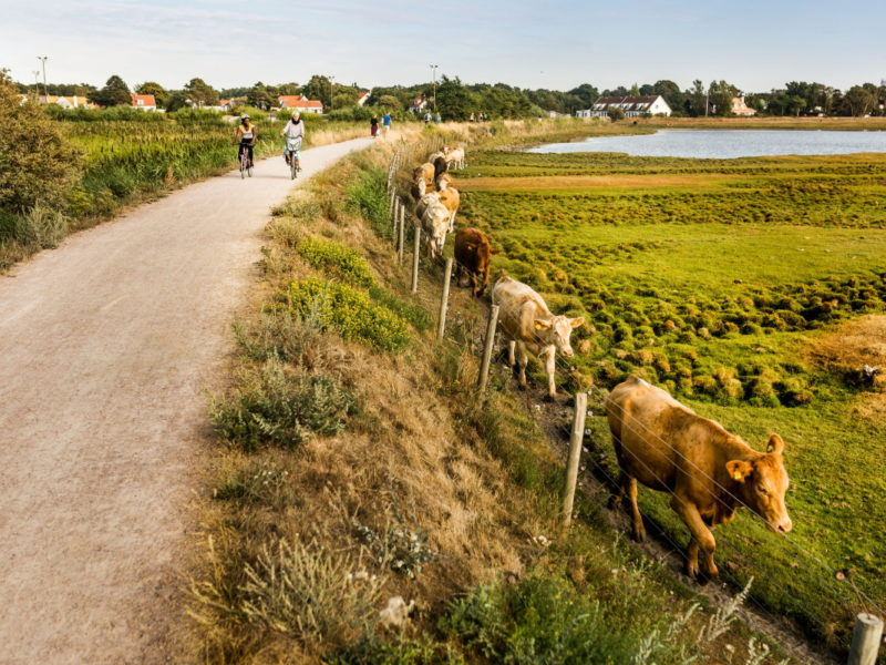 Along the way you cycle past farm shops with local produce and large farms with animals. Photo: Apelöga