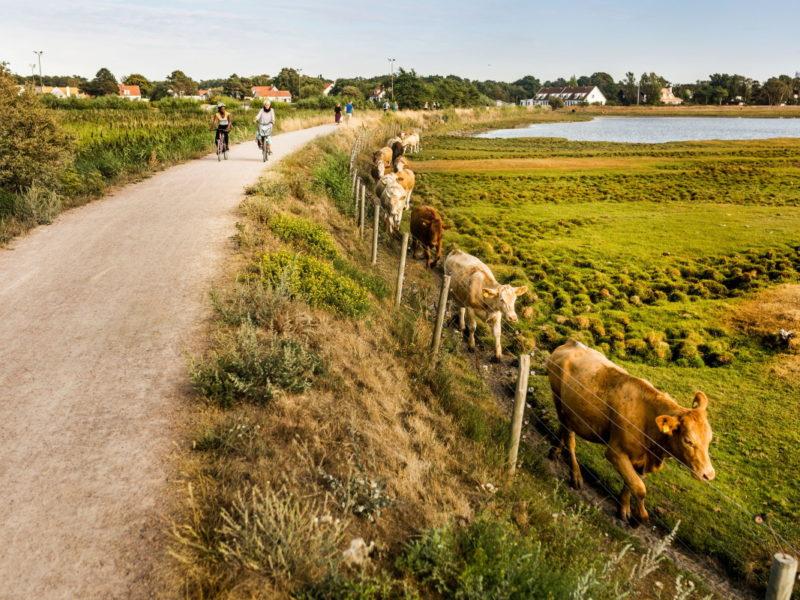 Längs vägen cyklar du förbi gårdsbutiker med lokala råvaror och stora gårdar med djur. Foto: Apelöga
