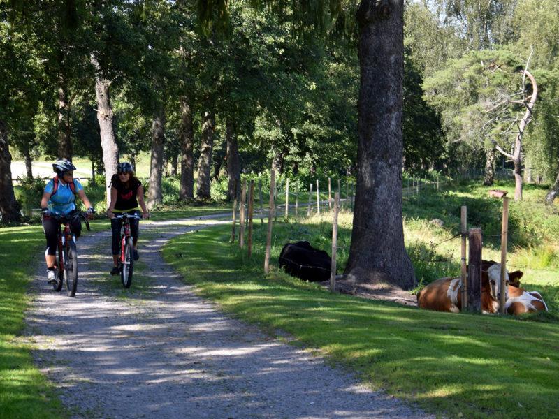 Cykeltur Arboga