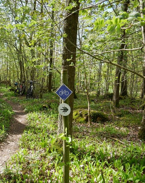 Cykla mtb i skogen