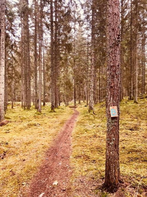Fina stigar i skogen vid Bergs Gård
