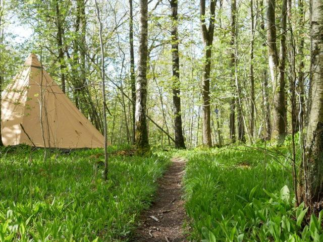 Guidad mtb-tur med middag på skogsrestaurang