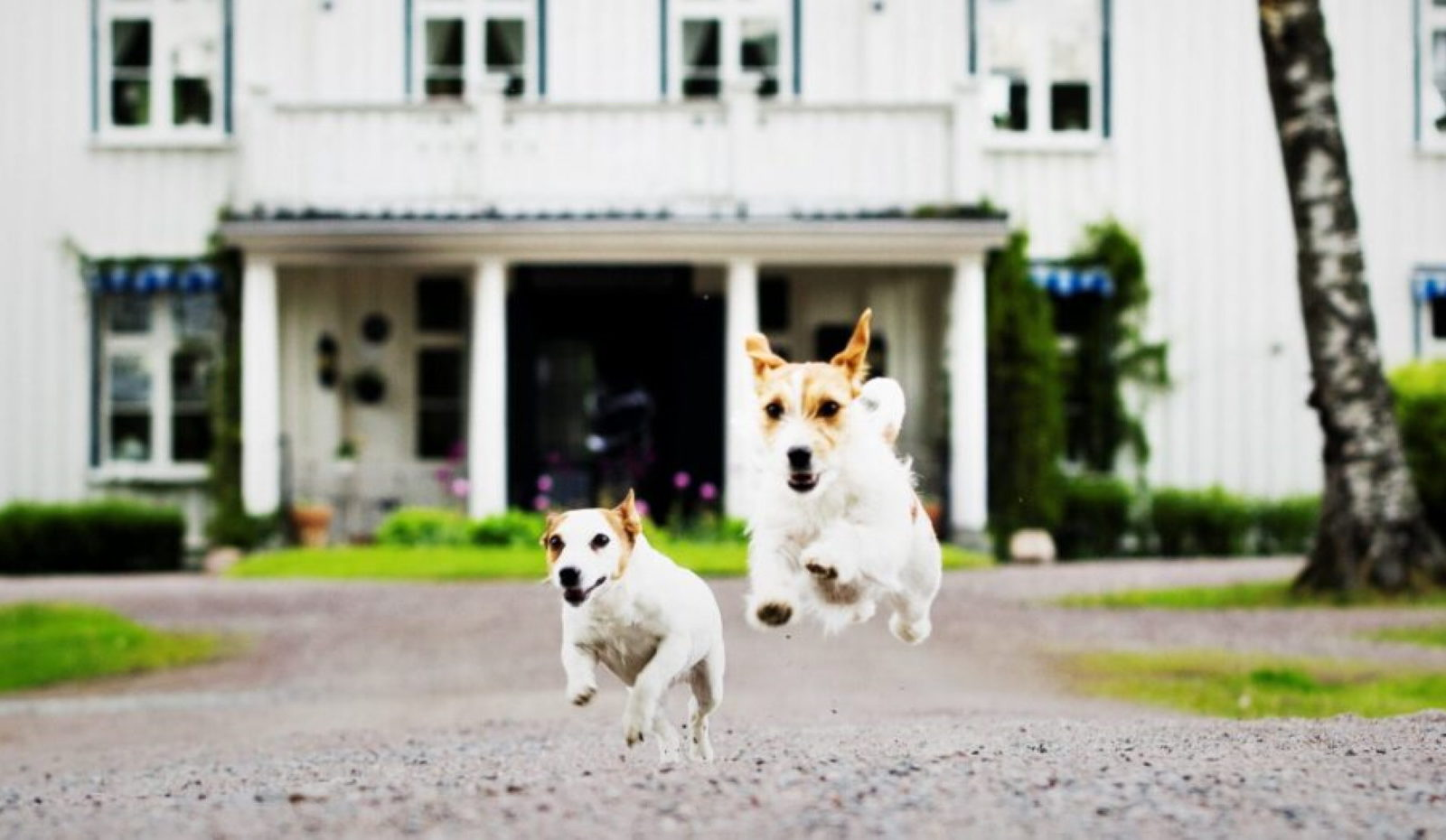 Ulvsby herrgård hundarna möter vid entren
