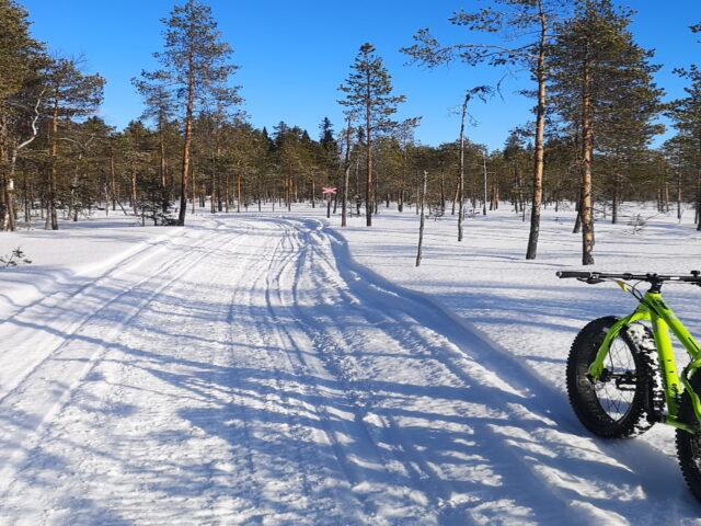 Cykla fatbike i Dorotea Lappland
