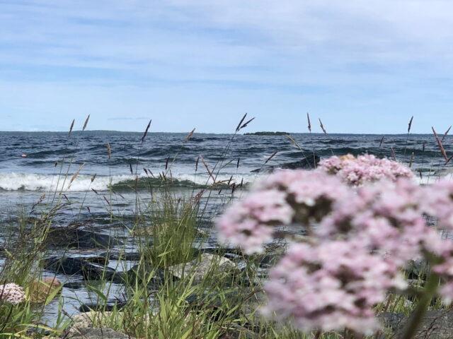 Cykelpaket Från skog till hav vid Jungfrukusten