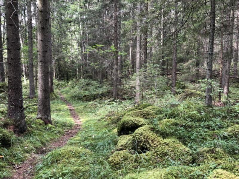 Hiking Hedenstugan