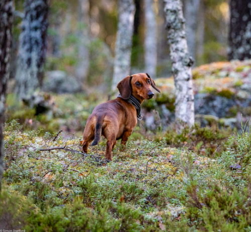Amber älskar skogspromenader