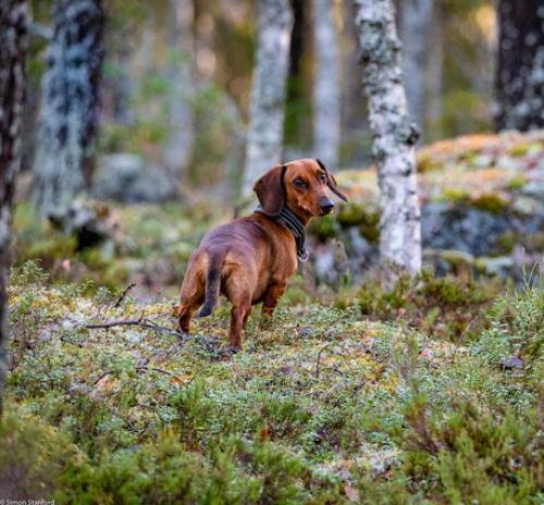 Amber loves forest walks