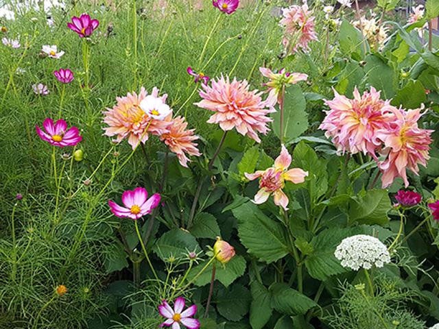 Guided bike ride for garden lovers - flowers 2