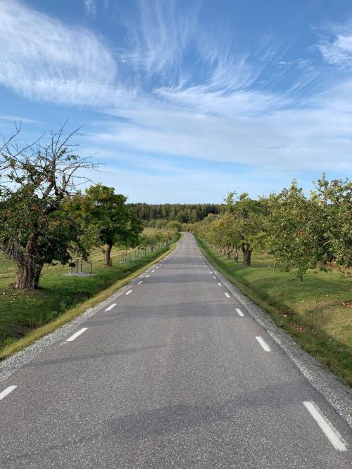 vacker cykelväg ekerö2