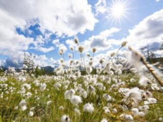 Lofsdalen_Sommar_2020_Cloudberry_Photography-6_low
